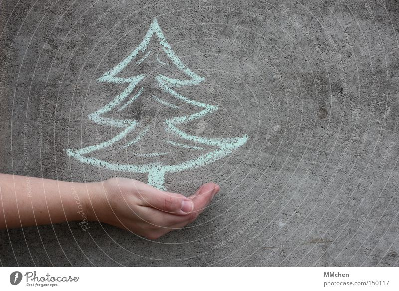 Christmas & Advent Hand Coniferous trees Wall (building) Feasts & Celebrations Christmas decoration Human being Gift Christmas tree Fir tree Event Tree Chalk Give Donate