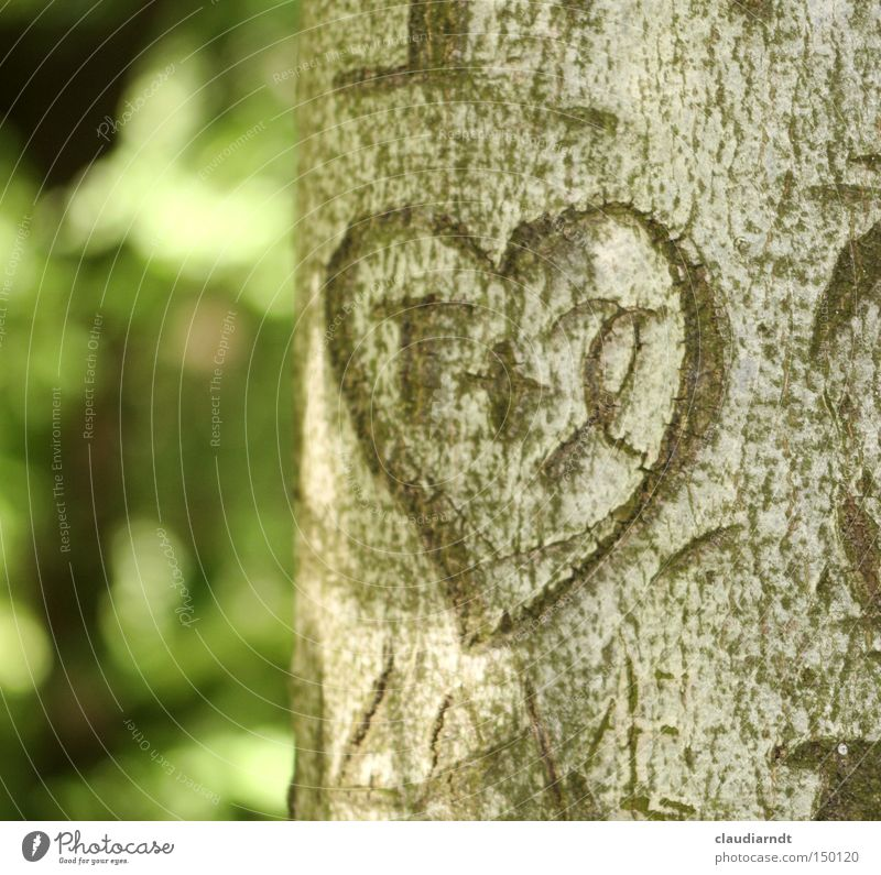 Tree Love Heart Romance Information Letters (alphabet) Sign Symbols and metaphors Furrow Infatuation Novella Tree trunk Tree bark Carve
