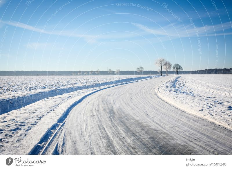 on foot Environment Nature Landscape Elements Sky Cloudless sky Clouds Winter Climate Beautiful weather Ice Frost Snow Tree Field Margin of a field Transport