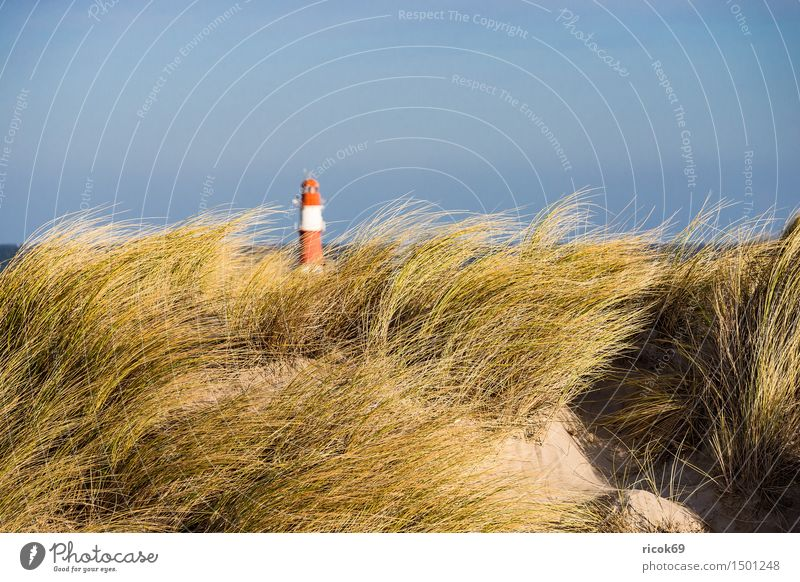 Dune in Warnemünde at the Baltic Sea coast Relaxation Vacation & Travel Beach Ocean Nature Landscape Clouds Wind Gale Coast Lighthouse Blue Yellow Red Tourism