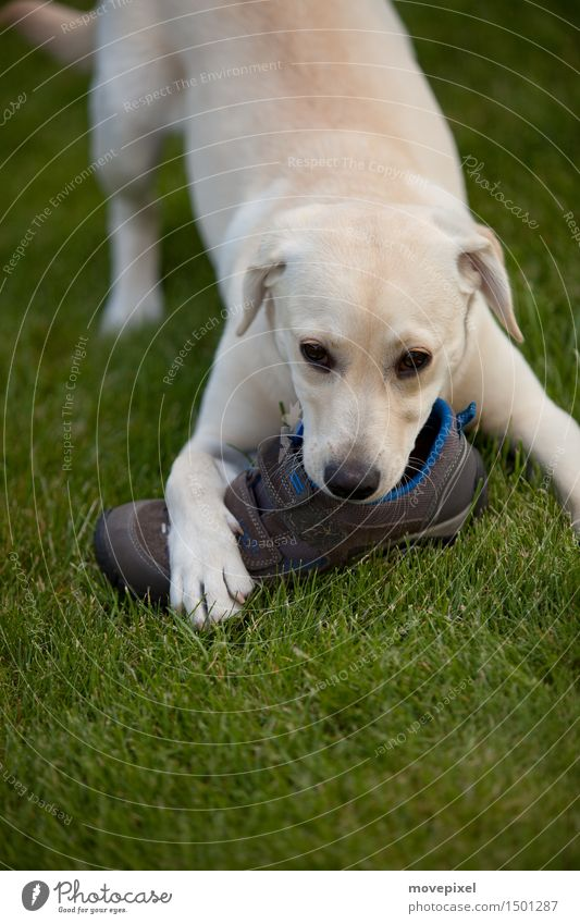 Dog Summer Animal Baby animal Spring Meadow Playing Garden Footwear Curiosity Delicious Toys Pet To feed Paw Innocent