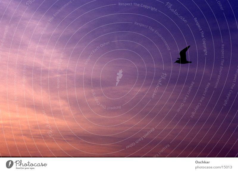 Bird vs. sky Horizon Ocean Lake Sunset Clouds Transport Sky Evening