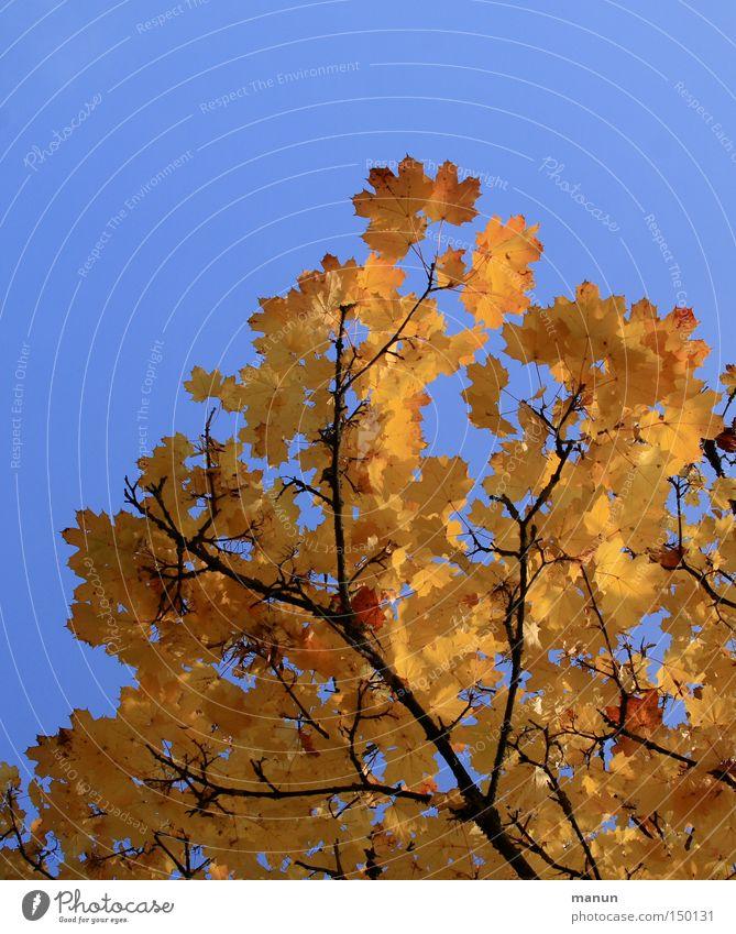 Nature Beautiful Tree Yellow Autumn Park Warmth Graffiti Gold Beautiful weather Colouring Autumnal Splendid Autumnal colours