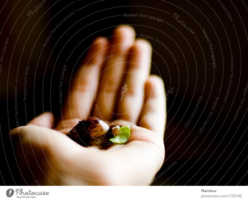 I am small, my heart is pure Fish Nutrition Hand Animal Snail To hold on To feed Small Cute Slimy Protection Feeble Shell-bearing mollusk Vulnerable Helpless