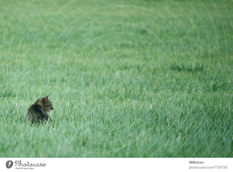 Autumn Grass Cat Hide Watchfulness Mouse Mammal Pet Hiding place Hidden Prey Robbery Foray