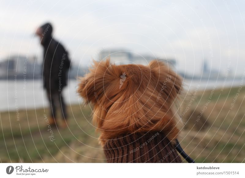 Dog Calm Cold Fear Sit To enjoy Future Study Observe Friendliness Protection Curiosity Safety Discover Trust Watchfulness