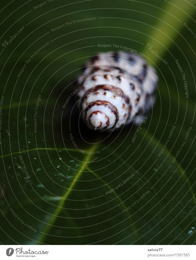 contrast Animal Plant Leaf Rachis Leaf green Wild animal Snail Snail shell 1 Brown Green White Calm Design Uniqueness Nature Perspective Contrast