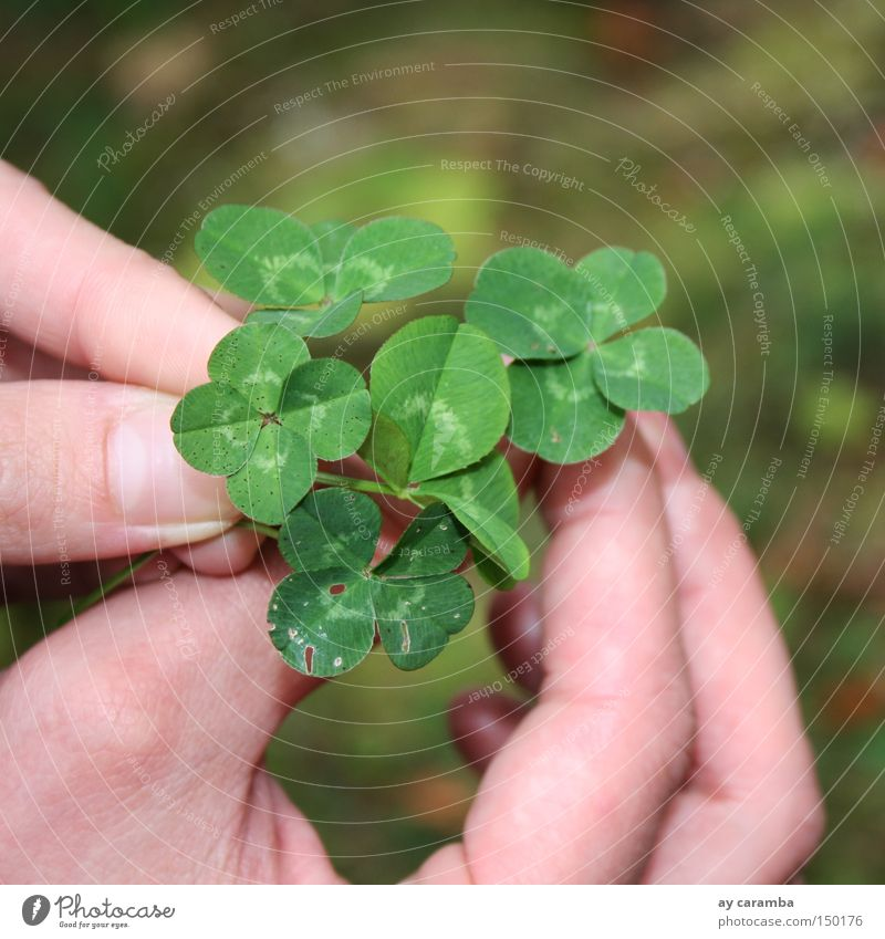 Enough luck for everyone Happy Clover Cloverleaf Green Hand Meadow Nature Harvest Slovenia Thank you very much Success Joy Summer