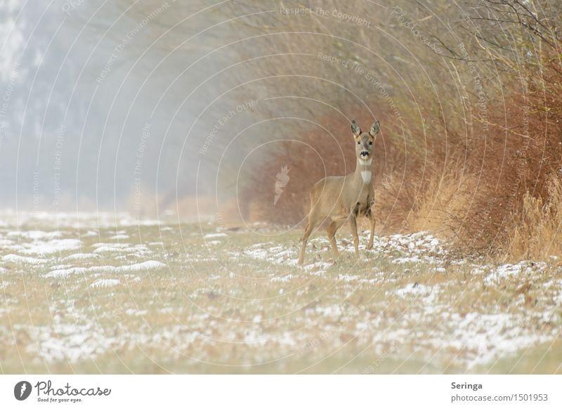 Nature Plant Animal Winter Meadow Snow Jump Field Fog Ice Wild animal Stand Frost Pelt Listening Animal face