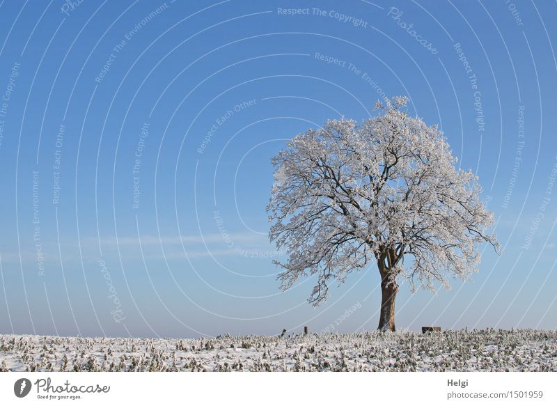 winter Environment Nature Landscape Plant Sky Winter Beautiful weather Ice Frost Tree Field Freeze Stand Esthetic Exceptional Uniqueness Cold Natural Blue Brown