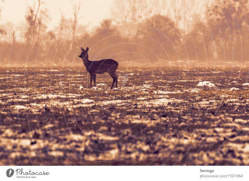 Lonely deer on the meadow Nature Winter Bad weather Fog Snow Meadow Field Animal Wild animal Pelt 1 To feed Freeze Looking Roe deer Fallow deer Fawn