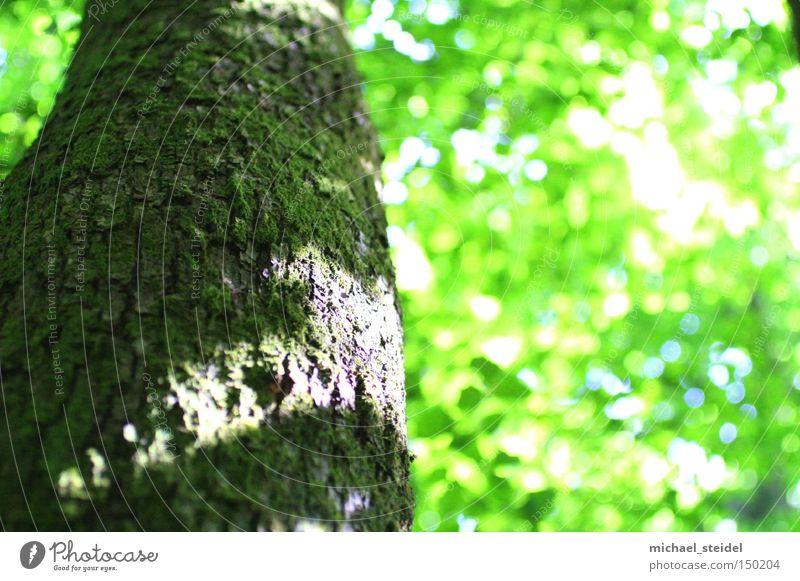 Nature Green Tree Leaf Dream Tree bark Light