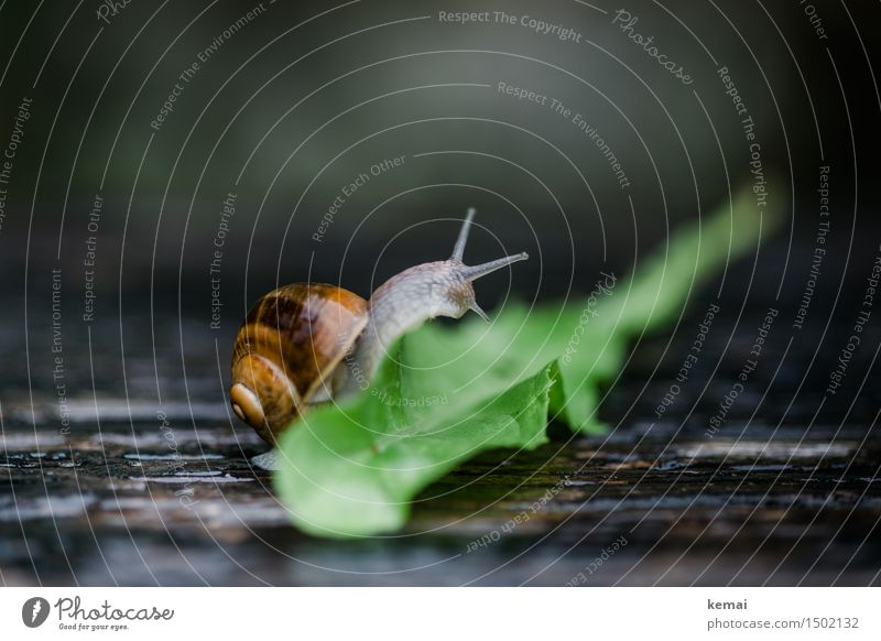 Nature Green Animal Environment Wild animal Sit Authentic Wet Climbing Dandelion Effort Crawl Snail Caution Slimy Snail shell