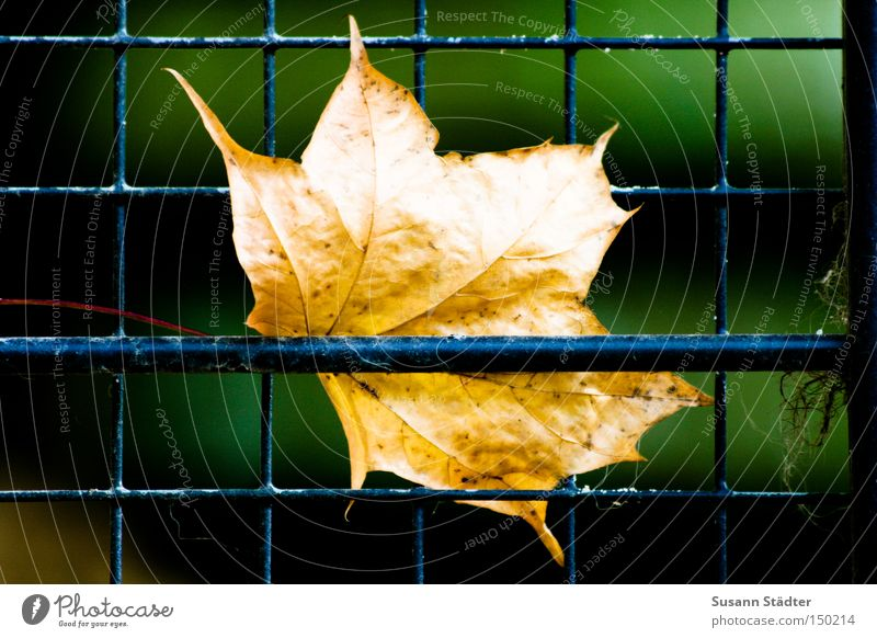 Tree Winter Leaf Animal Autumn Zoo Captured Penitentiary Grating Cage Maple leaf