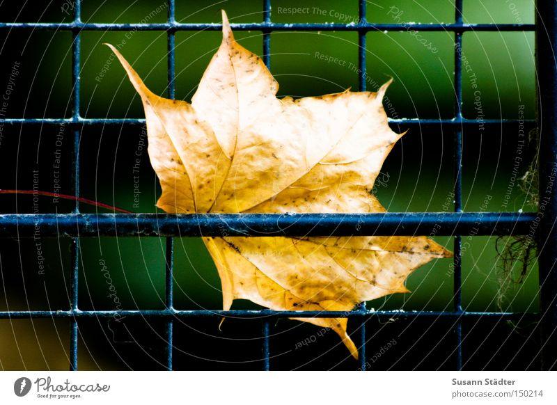 Tree Winter Leaf Animal Autumn Zoo Captured Penitentiary Grating Cage Maple leaf