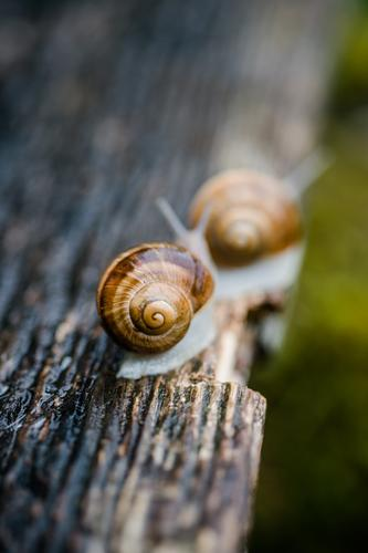 Nature Animal Wood Together Glittering Pair of animals Wild animal Trip Sit Authentic Large Wet Near Row Crawl Snail