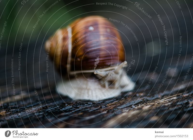 Nature Calm Animal Environment Funny Natural Wood Glittering Wild animal Sit Authentic Wait Wet Curiosity Serene Snail