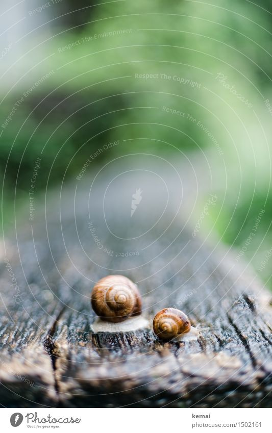 big and small Nature Animal Spring Rain Park Wild animal Snail Snail shell 2 Wooden table Authentic Glittering Large Small Wet Slimy Crawl Colour photo