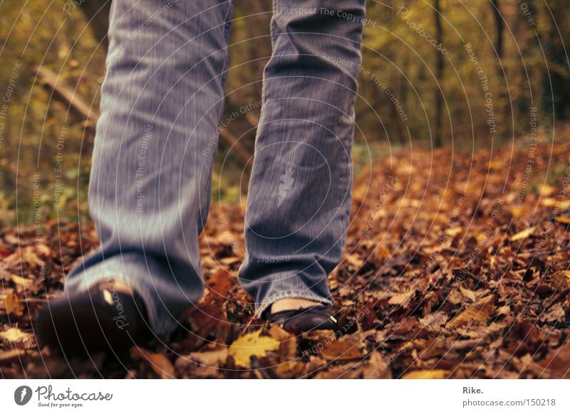 Through the foliage. Forest Tree Nature Environment Leaf Autumn Autumnal Going Walking To go for a walk Movement Leisure and hobbies