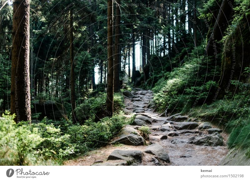 Nature Plant Beautiful Green Summer Tree Relaxation Landscape Calm Forest Mountain Environment Lanes & trails Stone Rock Hiking