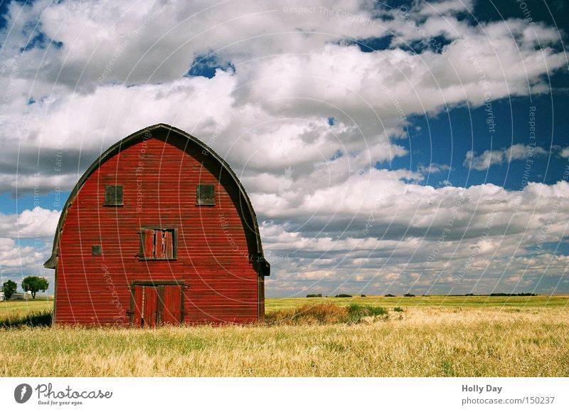 Don't make such a face. Barn Red Yellow Gold Golden yellow Field Harvest Eyes Clouds Vacation & Travel Face Agriculture Farm Canada Alberta Americas