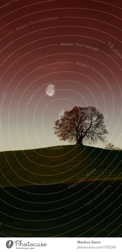 lonely tree Tree Evening Loneliness Moon Landscape Nature Sky Red Dusk Autumnal colours Hill Bavaria Field Vertical Grief Distress