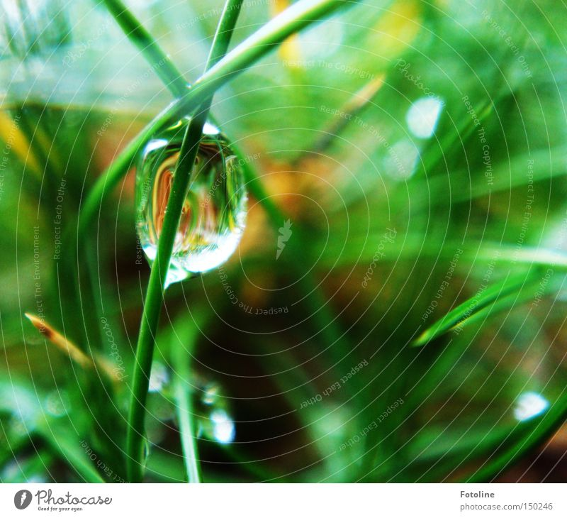 Water Winter Calm Meadow Autumn Grass Spring Rain Earth Wet Drops of water Earth Lawn Drop Blade of grass Smooth