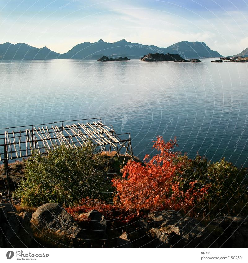 autumn sea Dried fish Scaffolding Autumn Fjord Ocean Norway Calm Mountain Loneliness Blue Coast Lofotes Henningsvær Water Freedom Nature