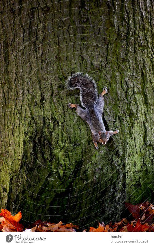 Tree Leaf Animal Climbing Mammal False Tree bark Stick Squirrel Rodent