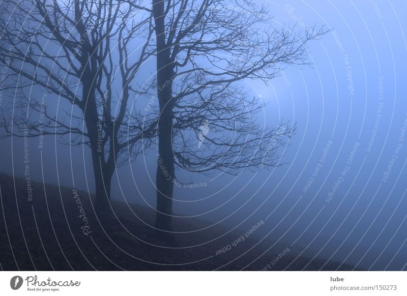 Tree Blue Loneliness Autumn Rain Fog Grief Creepy Distress Unclear Harrowing Fog bank
