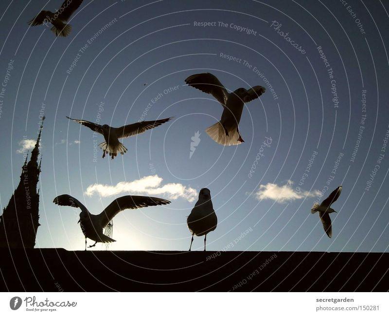 Sky Blue Sun Clouds Winter Black Cold Wall (barrier) Bird Under Seagull Traffic infrastructure Judder