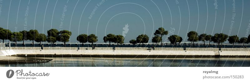 Nature Tree Ocean Blue Summer Autumn Coast Large Horizon Harbour Row Lakeside River bank Avenue Panorama (Format) Lisbon