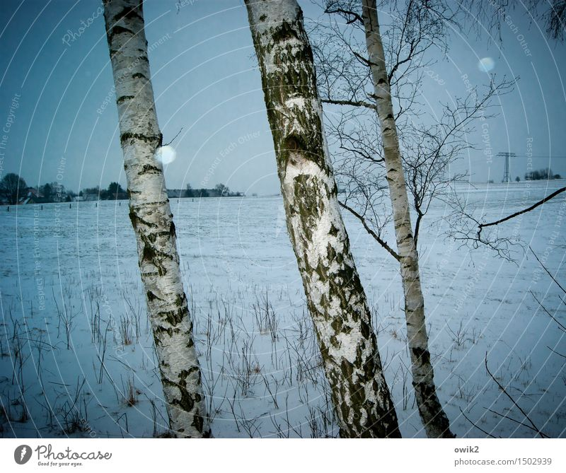 Winter, warped Electricity pylon Environment Nature Landscape Plant Sky Clouds Horizon Climate Weather Beautiful weather Snow Snowfall Tree Birch tree