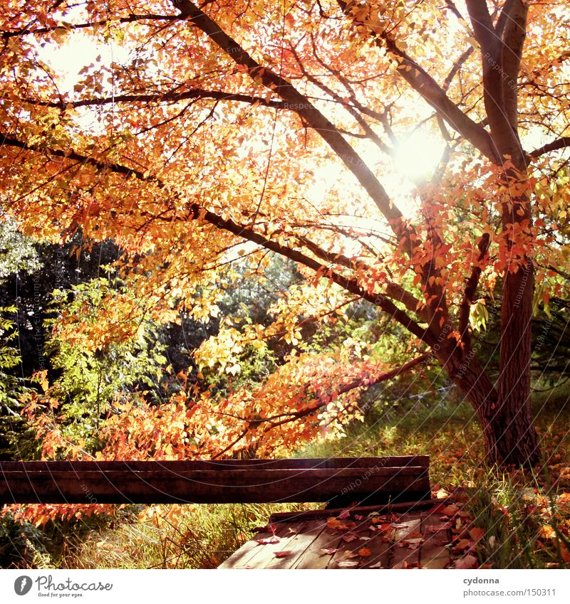 Nature Beautiful Tree Sun Leaf Autumn Emotions Landscape Time To fall Past Memory Magic Seasons Cardiovascular system