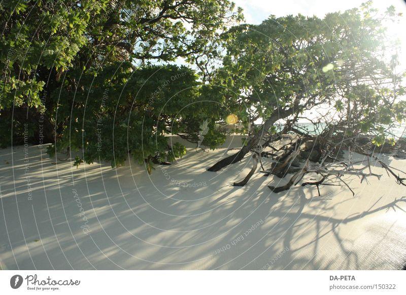 wild dream - Maldives Beach Sun White Bushes Vacation & Travel Ocean Dream Shadow Sunbeam Coast