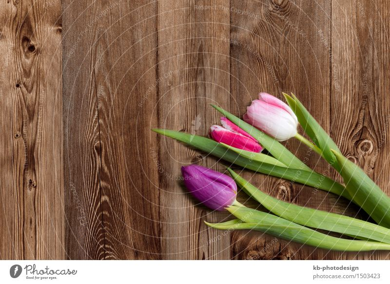 Three tulips on a wooden background Feasts & Celebrations Valentine's Day Mother's Day Easter Flower Tulip Blossoming flowers colorful mothers day