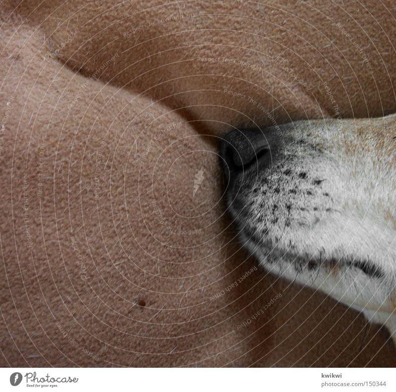 Animal Dog Nose Sleep Bottom Kitchen Lie Hind quarters Couch Odor Mammal Blanket Pet Muzzle Snout