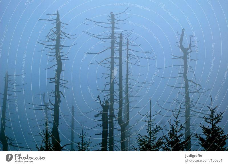 Nature Tree Winter Colour Forest Cold Autumn Fog Environment Mystic Haze November Harz Brocken