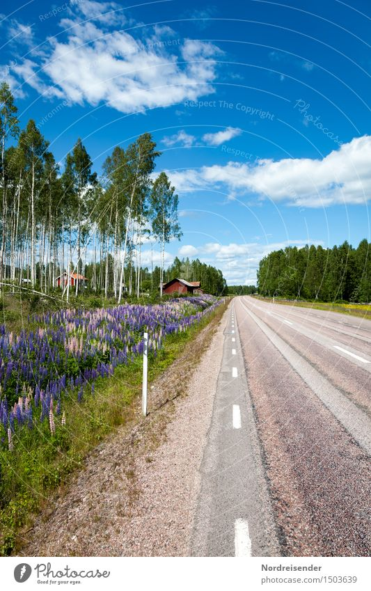 Värmland Vacation & Travel Landscape Summer Beautiful weather Tree Flower Village House (Residential Structure) Detached house Building Architecture Transport