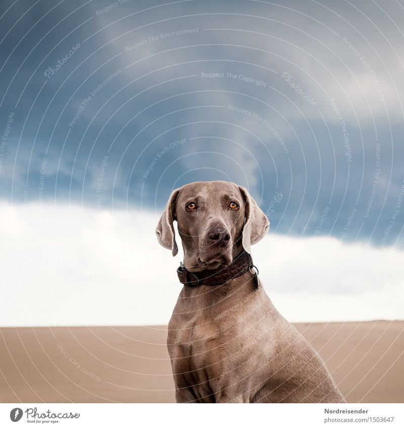 On the road with Tia Vacation & Travel Far-off places Storm clouds Bad weather Desert Animal Pet Dog 1 Sand Observe Esthetic Elegant Friendliness Blue Brown