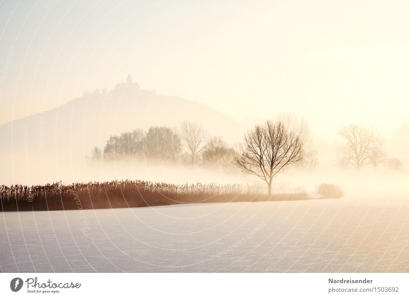 Nature Tree Landscape Calm Winter Cold Snow Lake Moody Bright Fog Ice Fresh Trip Climate Beautiful weather