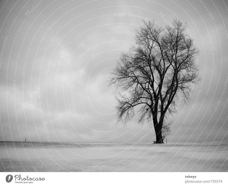 Nature Tree Loneliness Winter Cold Snow Alps Allgäu Black & white photo