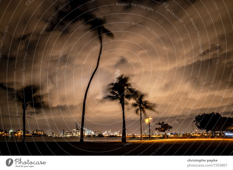 Miami Storm Vacation & Travel Tourism Far-off places City trip Summer vacation Sky Clouds Storm clouds Night sky Bad weather Wind Gale Tree Wild plant Palm tree