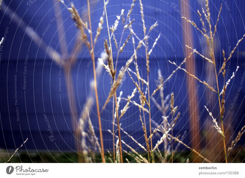Blue Lamp Autumn Wall (building) Grass Park Hope Blade of grass Marsh grass Seat of government Spreebogen