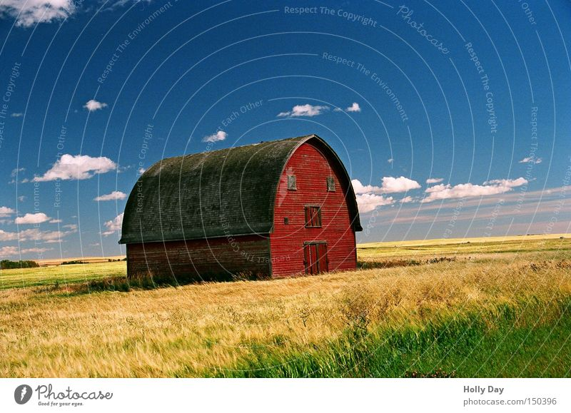 Blue Red Clouds Face Yellow Field Farm Agriculture Harvest Canada Barn Wheat Alberta