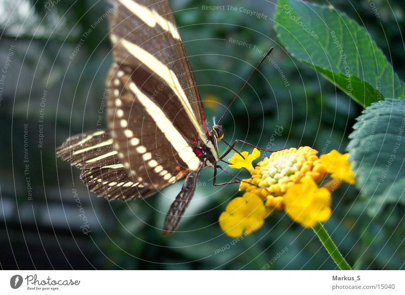 White Beautiful Blossom Brown Butterfly