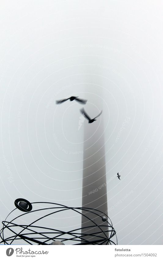 foggy l Fog Berlin Berlin TV Tower Alexanderplatz Television tower World time clock alex Capital city Deserted Clock Tourist Attraction Bird Flying Gray Black
