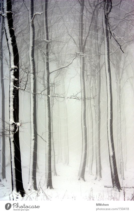 White Tree Winter Loneliness Black Forest Snow Fog Branch Mystic Fairy tale Witch Clearing Magician Jinxed Enchanted forest