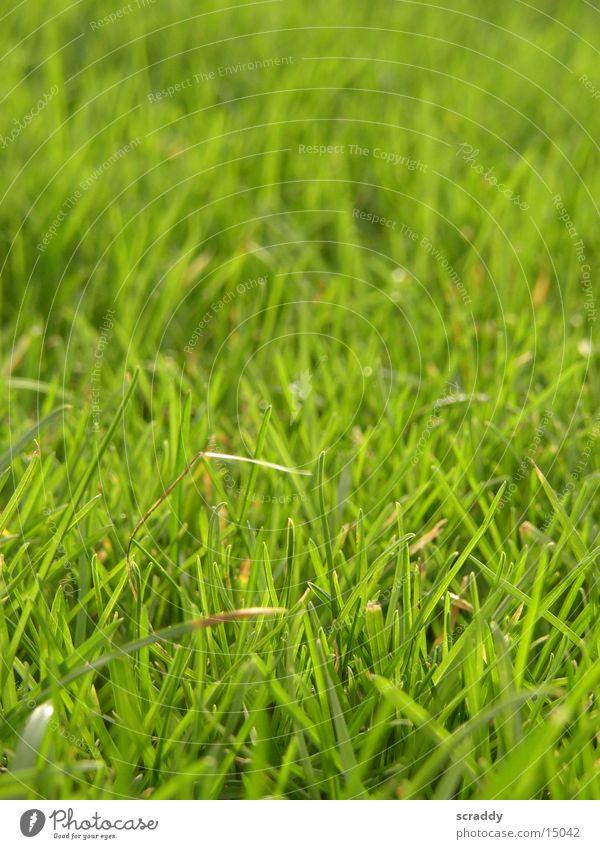 meadow Grass Meadow Green Spring Juicy Garden Spring Sun