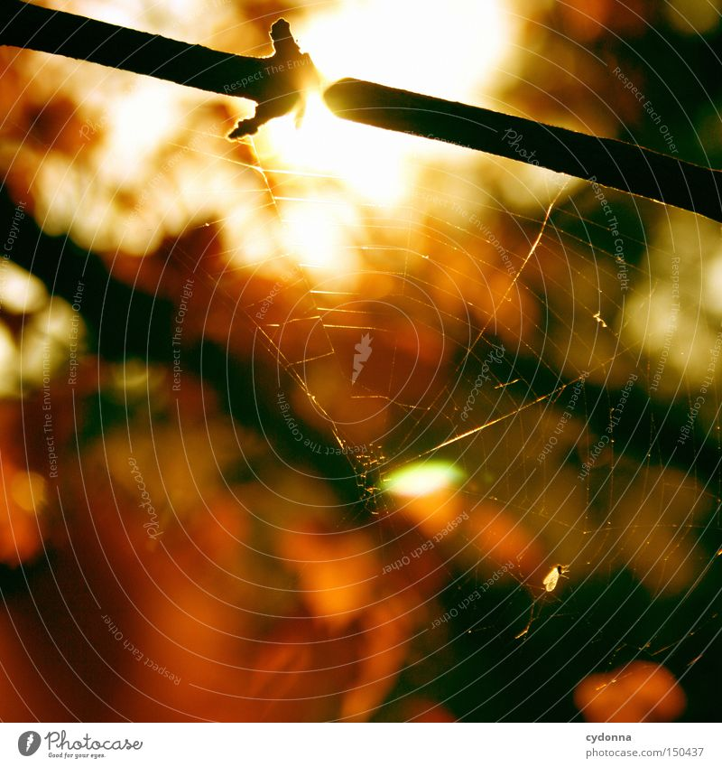 Nature Beautiful Tree Sun Leaf Autumn Emotions Landscape Time Esthetic To fall Past Memory Magic Spider's web Cardiovascular system